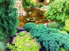 Как ухаживать за хвойными растениями на даче