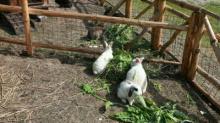 Рацион кормления кроликов