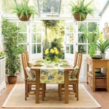 Расставляем комнатные растения дома правильно