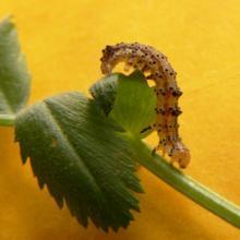 Защита растений без ядохимикатов.