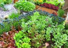Что лучше выращивать