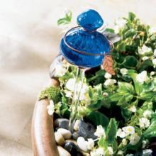 Как поливать цветы в отпуске