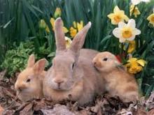 Профилактика заболеваний кроликов