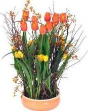 Как вырастить тюльпаны в домашних условиях