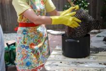Забой курицы и обработка тушки