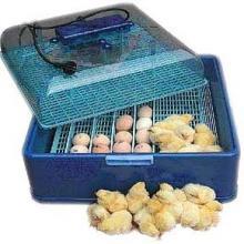 Выведение цыплят в инкубаторе