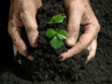 Как подготовить рассаду