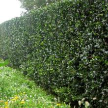 Хозблоки за живой изгородью